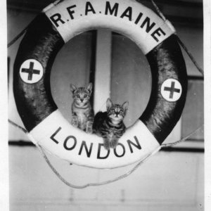 RFA Maine[3] Hospital ship