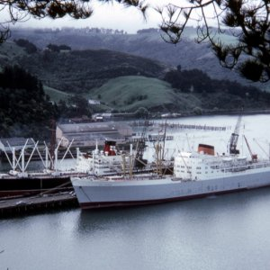 Port Brisbane at Port Chalmers