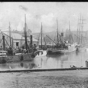 The wharves, Gisborne